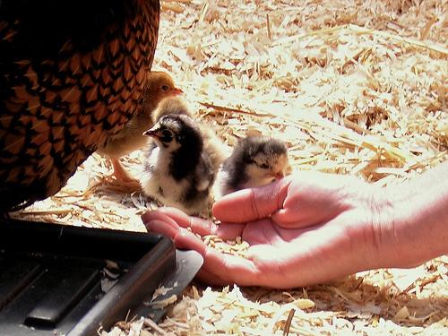 gondoskodjunk állatainkról