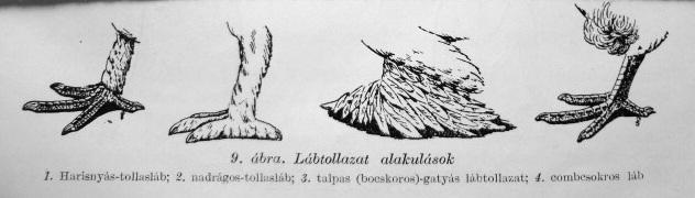 Galamblábtípusok