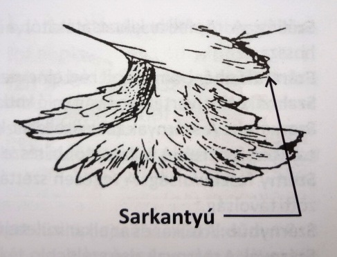 Sarkantyú